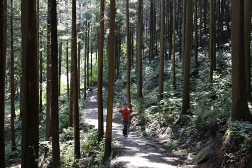 무등산편백휴양림의 편백숲. 편백숲 사이사이로 임도와 오솔길이 단장돼 있다. 그 길을 하늘거리는 것만으로도 힐링과 치유가 된다.
