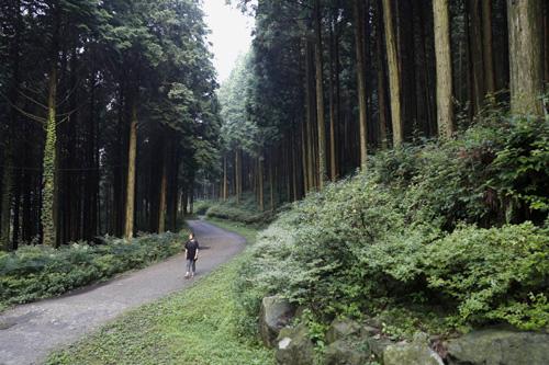 편백숲에서 하늘거리는데, 갑자기 소나기가 쏟아졌다. 소나기가 내린 직후 편백숲은 생기까지 머금어 더 생동감이 넘친다.