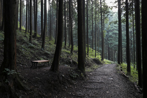 소나기가 내린 직후의 편백숲. 캄캄해졌던 편백숲이 다시 환해지면서 몽환적인 풍경까지 선사한다.