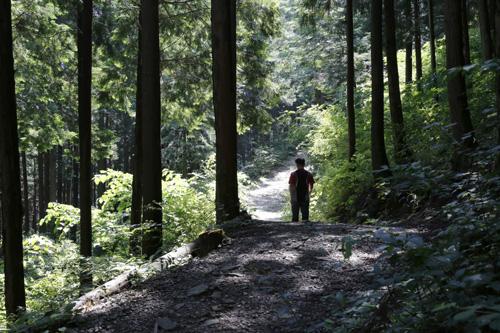 무등산편백휴양림의 편백숲 오솔길. 편백숲의 허리춤을 따라 난 길이 예스럽다.