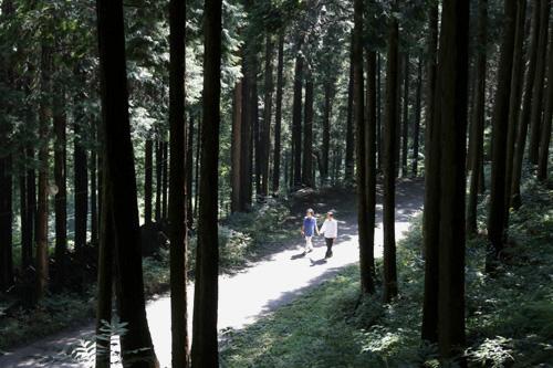 무등산편백휴양림의 편백숲. 숲속에서 대화를 끝낸 진춘호 대표 부부가 편백숲 사이로 걸어나가고 있다.
