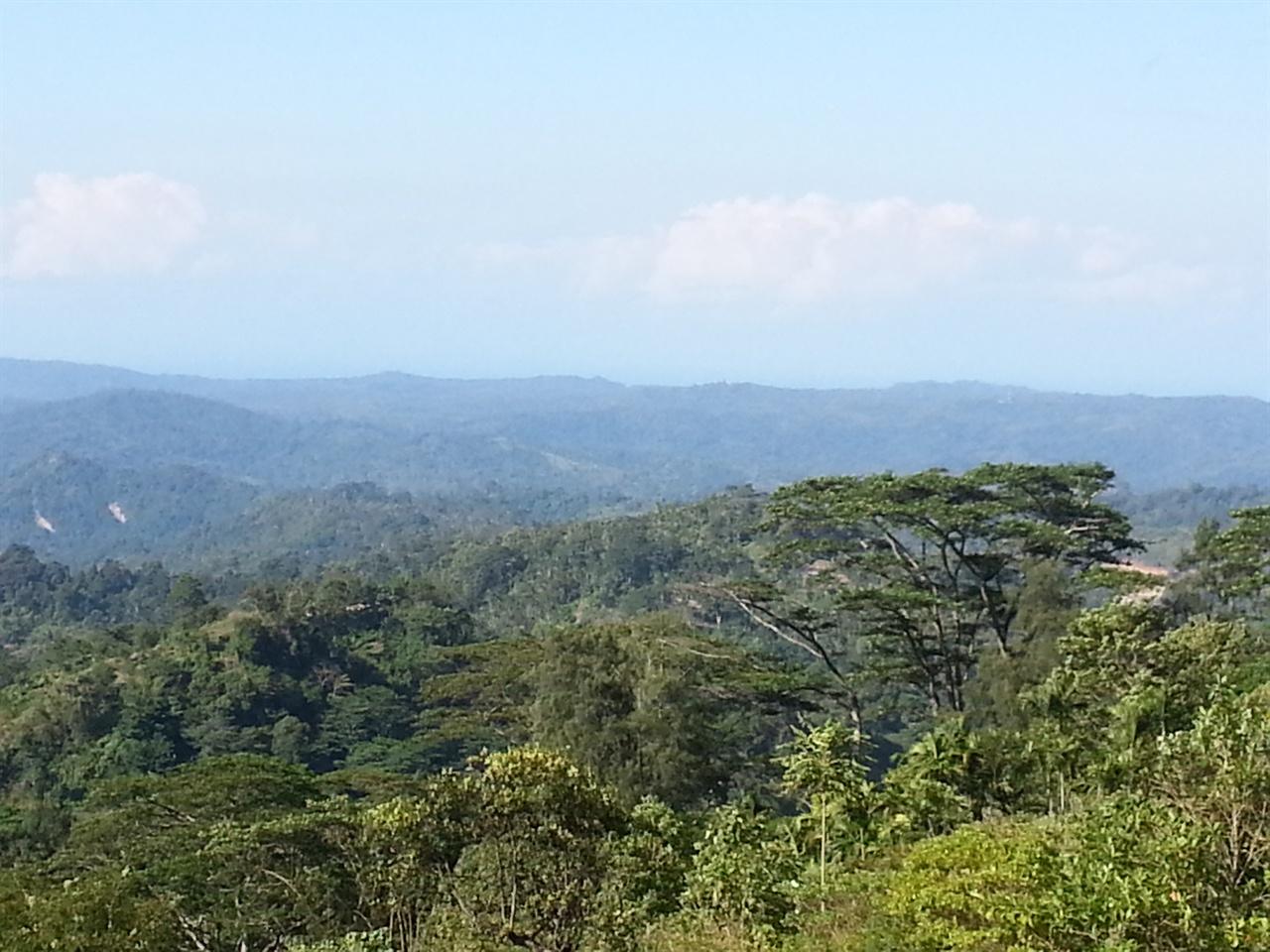 그늘나무 30미터 이상 높이까지 자라지만 숲을 뒤덮을 만큼 잎이 무성하지 않은 그늘나무(shade tree) 아래서 커피나무가 공생하며 자란다