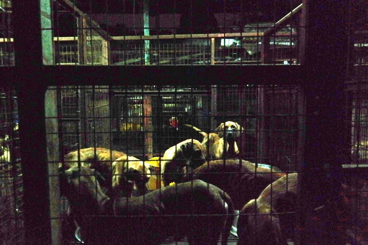 성남 소재의 한 개 농장(도축장) 대부분의 식용으로 소비되는 개들은 음성적인 곳에서 비위생적인 환경에서 사육되고, 잔인한 방법으로 도축되고 있다.