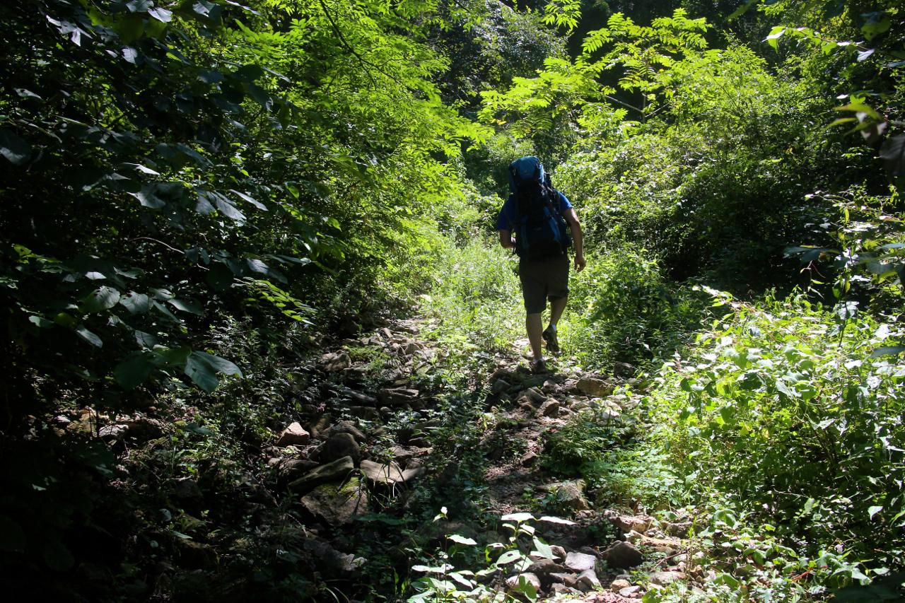 길은 흔적조차 찾기 어려웠다. 수풀이 얼굴을 스쳤다. 습기 많은 흙바닥은 풀에 덮혀 미끄러웠다.