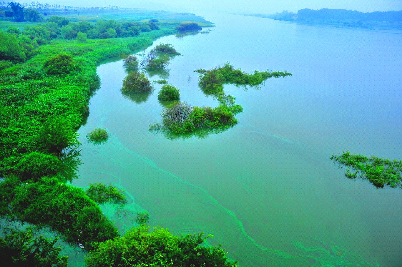 2012년 8월 왕진교에서 본 금강 녹색이 참 아름답다.