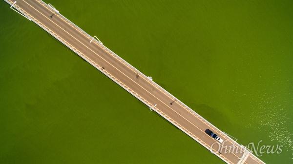 24일 오후 대구 달성군 낙동강 달성보 하류 3km 지점 박석진교 일대에 녹조가 창궐해 강 전체를 뒤 덮고 있다.