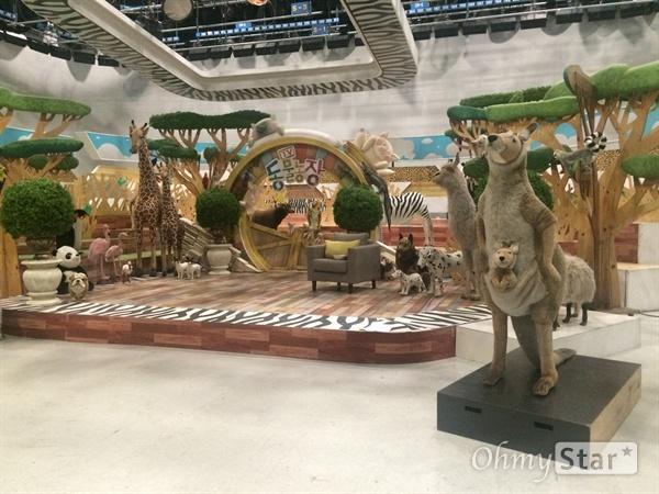 지난 18일 SBS의 15년 된 장수 프로그램 <TV동물농장>의 녹화가 있었다. 그 녹화 현장을 <오마이스타>에서 잠시 동행했다.
