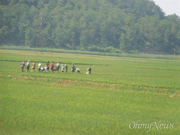북한의 협동농장.