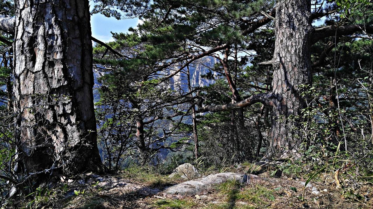 망경대 정상 해발 574m인 오색 망경대의 정상엔 수 백년 묵은 아름드리 거목들이 자리하고 있다. 이 지점에서 20m 가량 더 앞으로 내려서면 조망이 환하게 트인다.