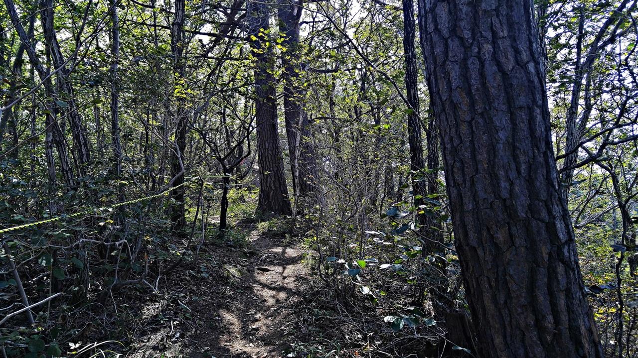 망경대 숲길 망경대 능선은 곳곳에 6·25전쟁 때 판 참호들이 있고, 바위에도 총탄의 흔적들이 많지만 고목들 또한 잘 보존되어 있다.