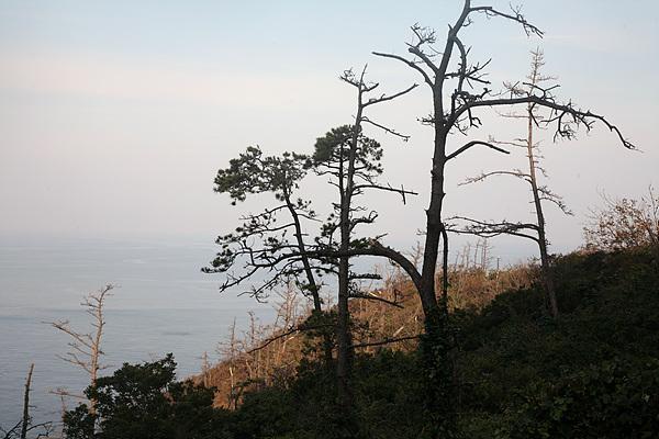 섬 주변을 돌아보니 대부분의 해송이 재선충 피해를 입어 고사하고 있어 보는 이들을 안타깝게 했다