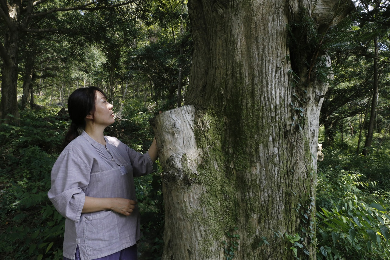 보림사 비자림의 비자나무. 한눈에 봐도 세월의 더께가 묻어난다.