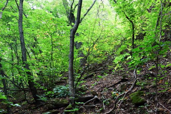 망대경가는 숲 46년만에 개방된 망경대 가는 길에 본 숲풍경