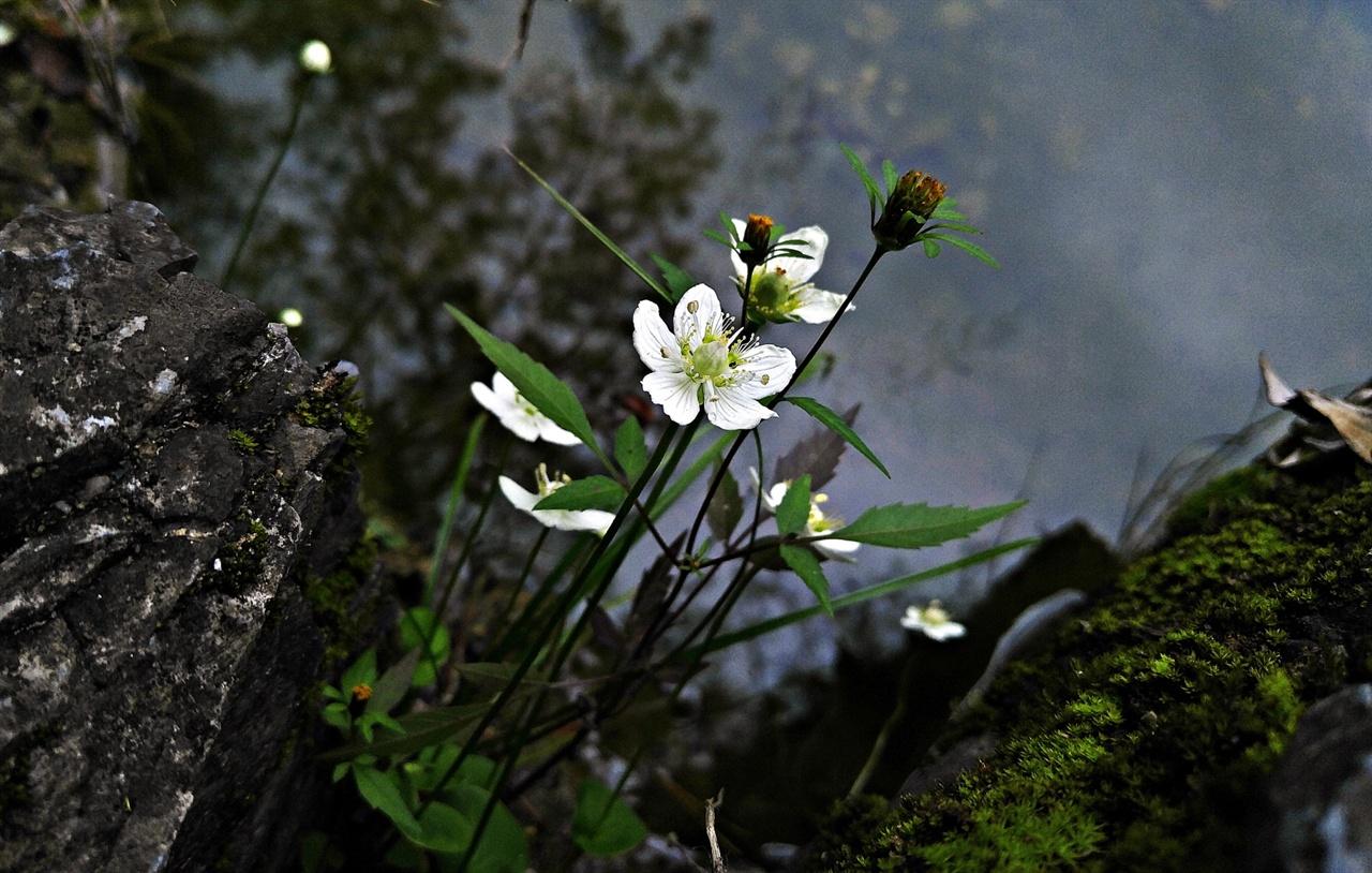 물매화 물가 이끼 낀 바위틈에서 꽃대를 올려 꽃을 피워낸 물매화는 그 자체의 아름다움과 함께 주변 환경과 참으로 잘 어울릴 줄 아는 화합을 자랑한다.