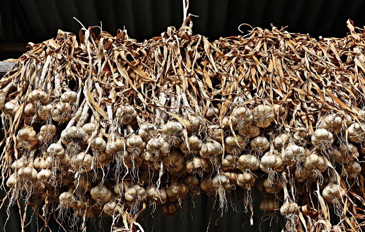 마늘 우리의 음식문화에서 전국 어느 곳에서나 쉽게 만날 수 있는 재료 중에 마늘과 고추만큼 폭 넓게 사용되는 것도 없다. 물김치는 물론이고 볶음이나 조림, 또는 그 자체만으로도 다양한 음식을 만들어 낼 수 있으며 한국적인 맛의 대명사라 할 수 있는 '매운 맛'이 바로 이 두 가지 재료 덕에 얻은 명성이다.