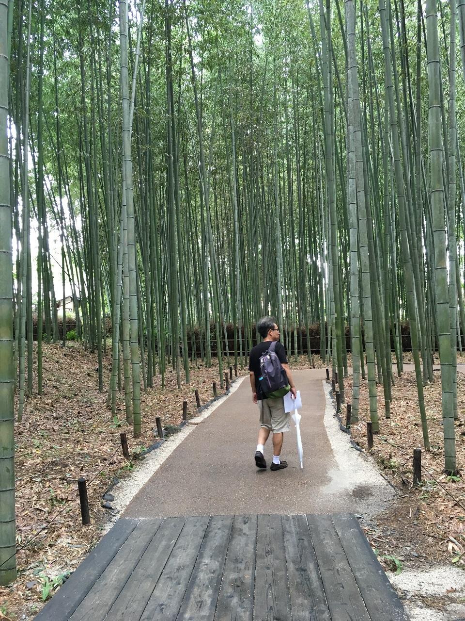 하늘 끝에 닿을 듯 빽빽이 늘어선 푸른 대나무숲.