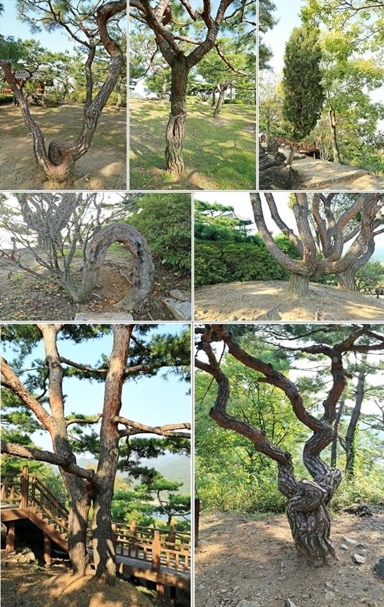 청풍문화재단지에서 만나는 나무들