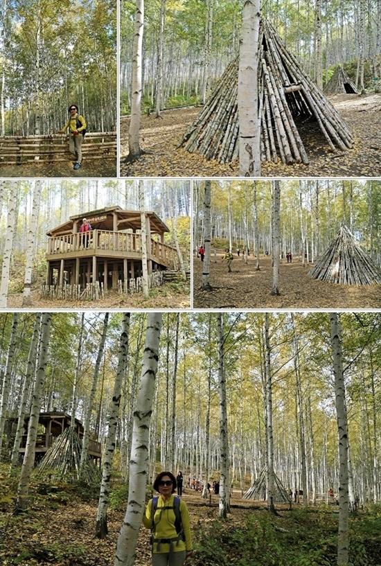 속삭이는 자작나무숲 2