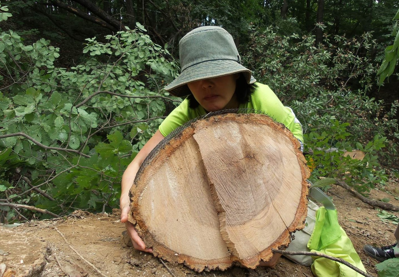 겨우 감싸 안을 수 있는 큰 참나무들이 지난 2015년1월26일과 8월10일, 불법으로 벌목되었다. 사업지 외의 원형녹지의 나무들이 이렇게 참담하게 잘려나갔다.