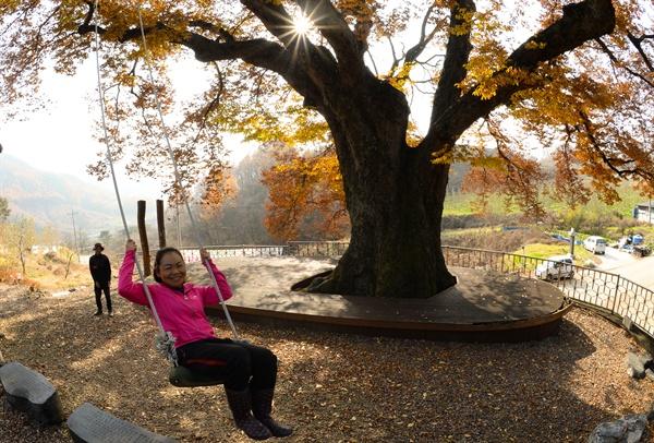 거창 고제면 봉계리 마을 입구 700년 수령의 느티나무.