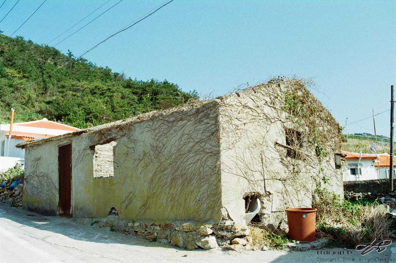 묵리 35mm네거티브필름(프로이미지). 묵리 입구에서 처음 만나는 풍경. 마을의 거의 모든 집이 이런 덩굴에 감싸여있다.