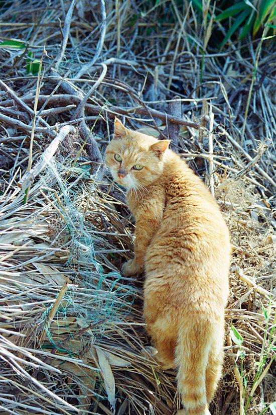 묵리의 고양이 35mm네거티브필름(프로이미지). 묵리에서 만난 고양이. 다가와서 골골댈 것을 기대했으나 경계심이 꽤나 있는 녀석이었다.