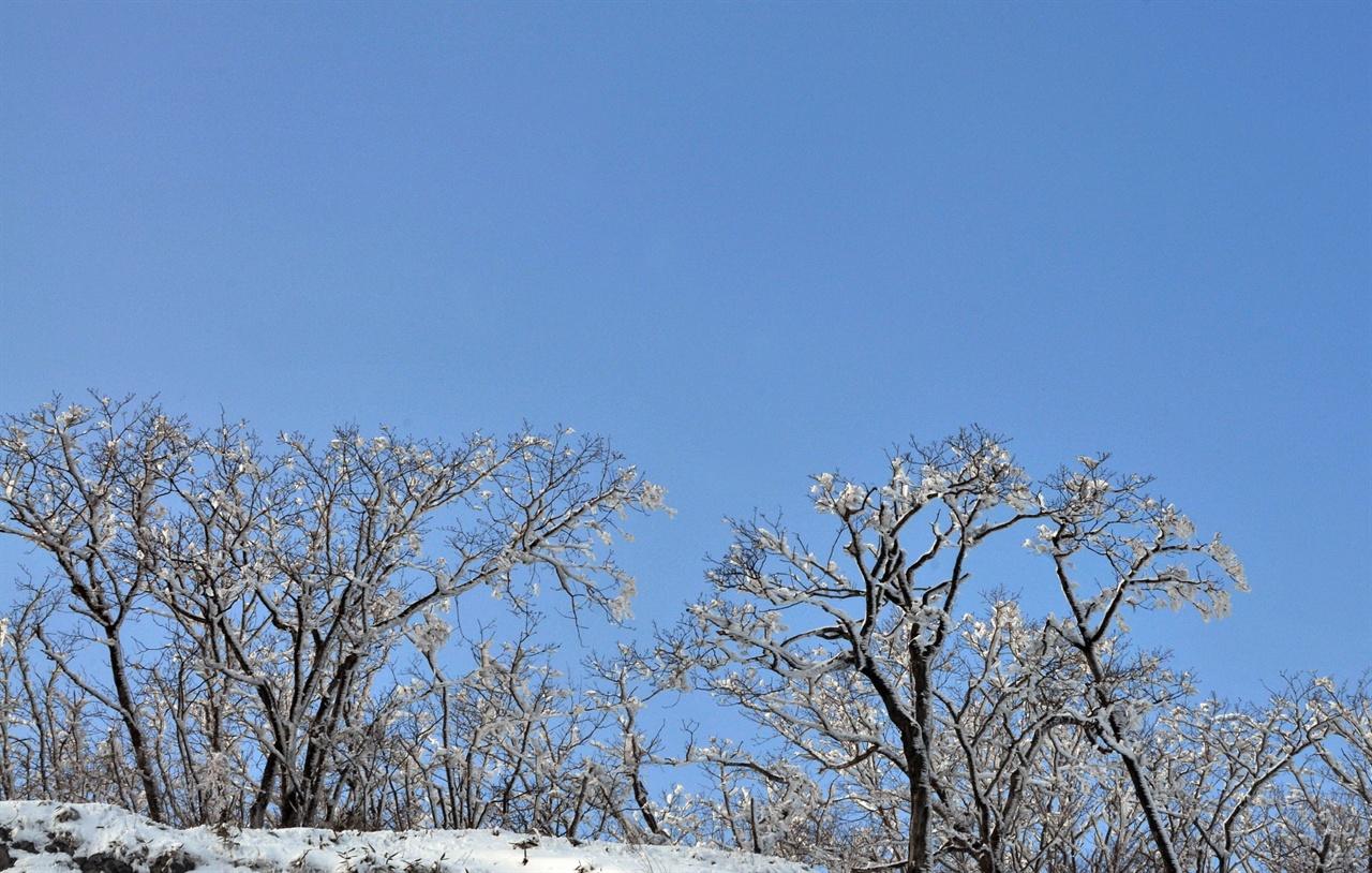 눈꽃 바위와 잎을 모두 떨어뜨리어 낸 나무를 또 다른 캔버스로 그려낸 겨울 풍경화를 보는 즐거움이 찬바람 매서운 날만 느낄 수 있는 여행의 묘미 아닐까. 눈이 내린 뒤 바람이 매서울수록 더 곱게 눈꽃은 피어 보는 이들에게 환상의 세계로 이끌어간다.