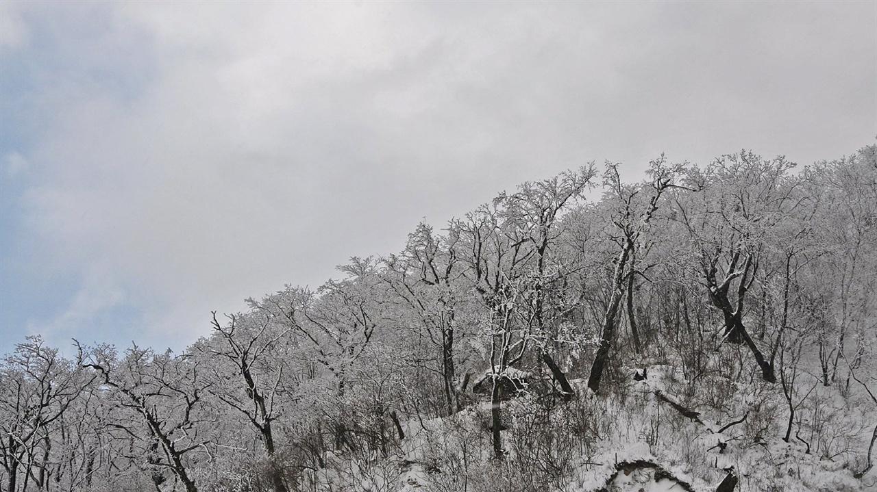설화(눈꽃) 눈꽃이 제대로 피는 조건이 있다. 눈이 내린다고 언제든 눈꽃을 볼 수 있는 건 아니다. 눈이 내릴 때 기온이 많이 내려가면 곧장 눈꽃을 만날 수 있다. 그리고 낮 시간엔 충분히 온도가 올라가 습도가 높았다가 오후에 해가 기울며 기온이 갑자기 영하로 뚝 떨어지면 눈꽃만큼 근사한 상고대가 만들어진다. 폭설 뒤에도 며칠 지나 기온이 급격하게 오르고 내리는 변화와 함께 눈꽃을 만날 수 있는데 그러한 조건을 충족시키는 오색령 부근에서 자주 만날 수 있다.