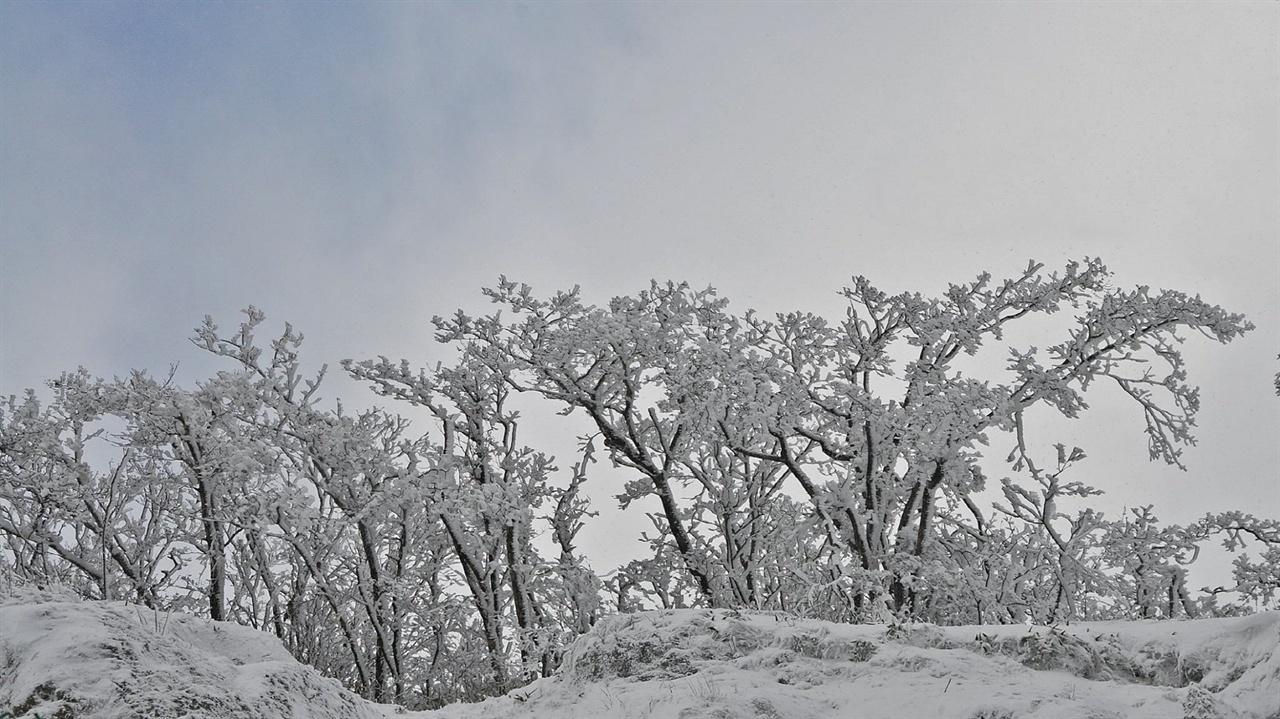 설화(눈꽃) 바위를 잘라낸 절개지 위에 뿌리를 내리고 자란 참나무들이 겨울철이면 이와 같은 풍경을 만들어 낸다. 어떤 시인도, 어떤 화가도 이처럼 절묘하고 아름다운 작품을 내 놓은 적이 없다. 자연이 만들어낸, 바람과 눈이 만들어낸 작품이다.