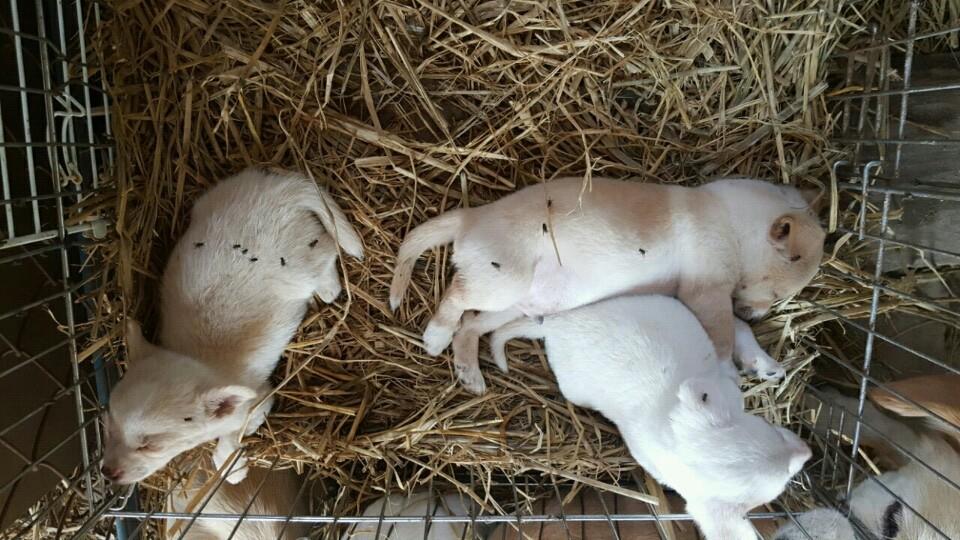 보호소에 있던 형제 강아지들