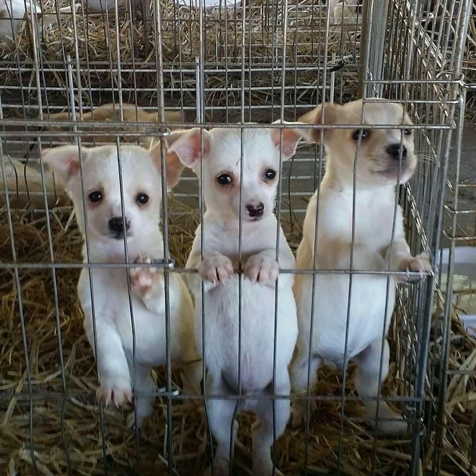 보호소에 있던 철장 속 형제 강아지들
