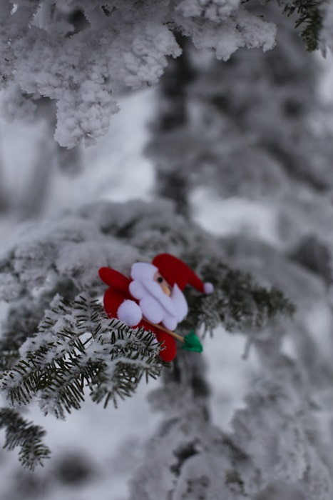 눈꽃 위 산타 눈꽃이 핀 나무에 걸린 산타모형