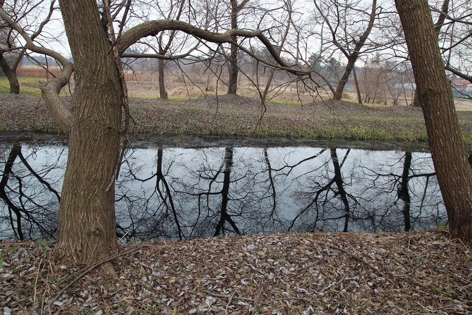 호수에 잠긴 왕버들나무의 반영이 아름답다.