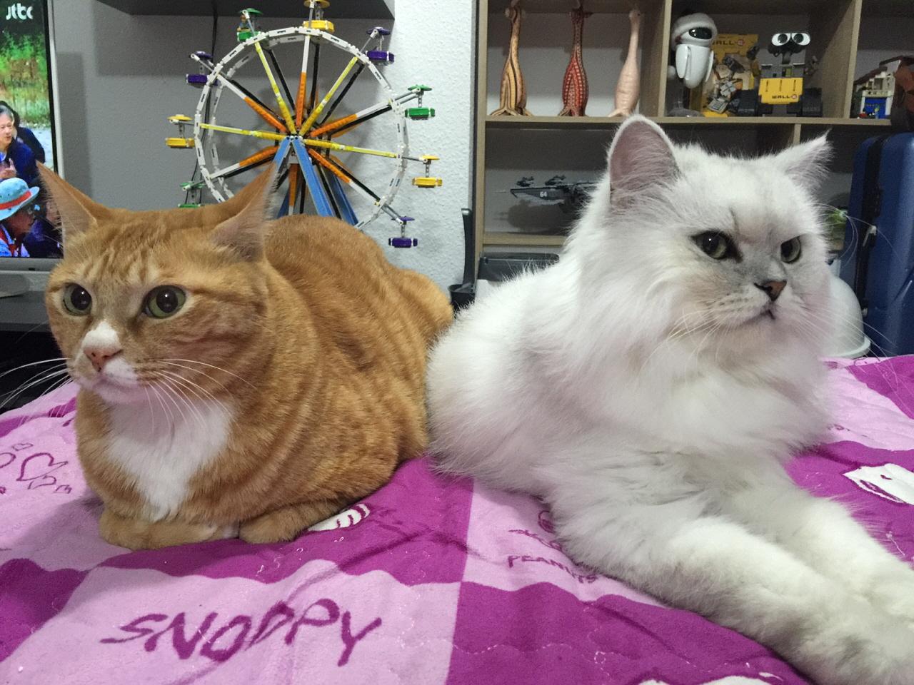 취업 후 부모님이 깜짝 선물로 데려온 한국에서 키우던 고양이들.