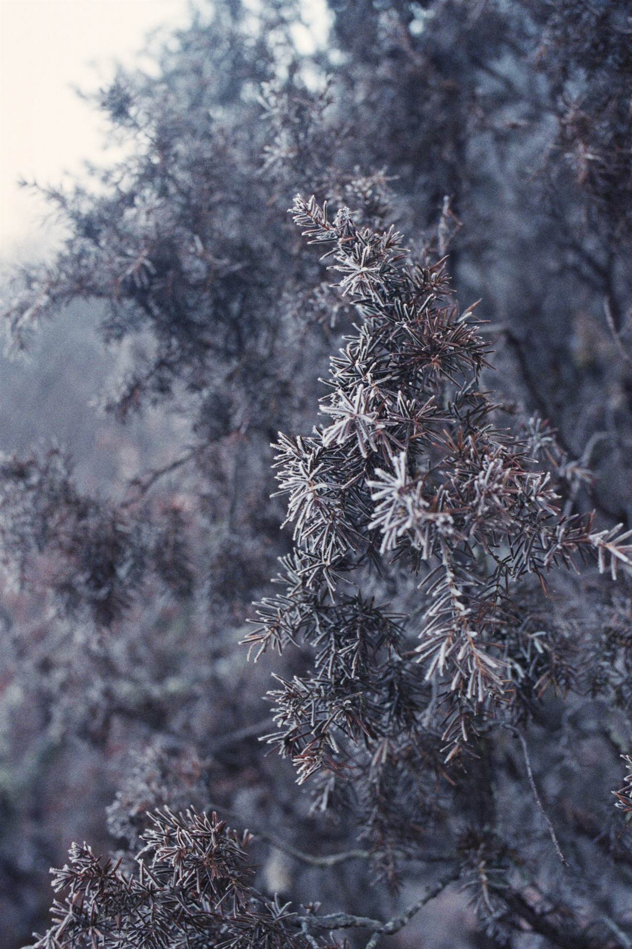 서리와 나무 전망대의 침엽수 한 그루가 드문드문 찬 공기로 옷을 해 입었다.