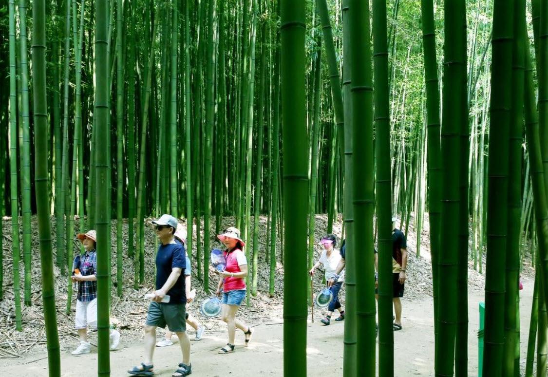 지난해 여름의 태화강 십리대숲
