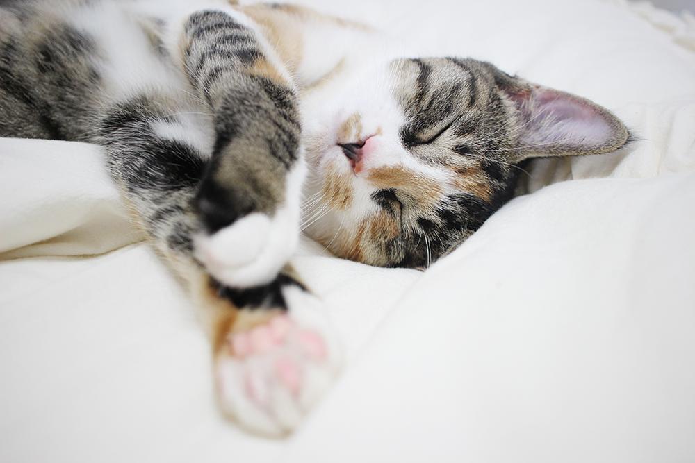 잘 때는 평화로운 고양이