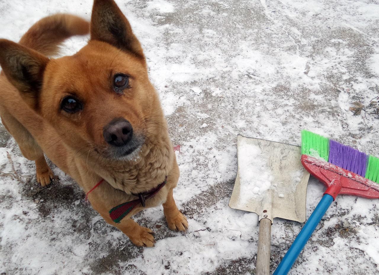 눈 오늘 날, 강아지도 사람만큼 눈을 좋아한다.