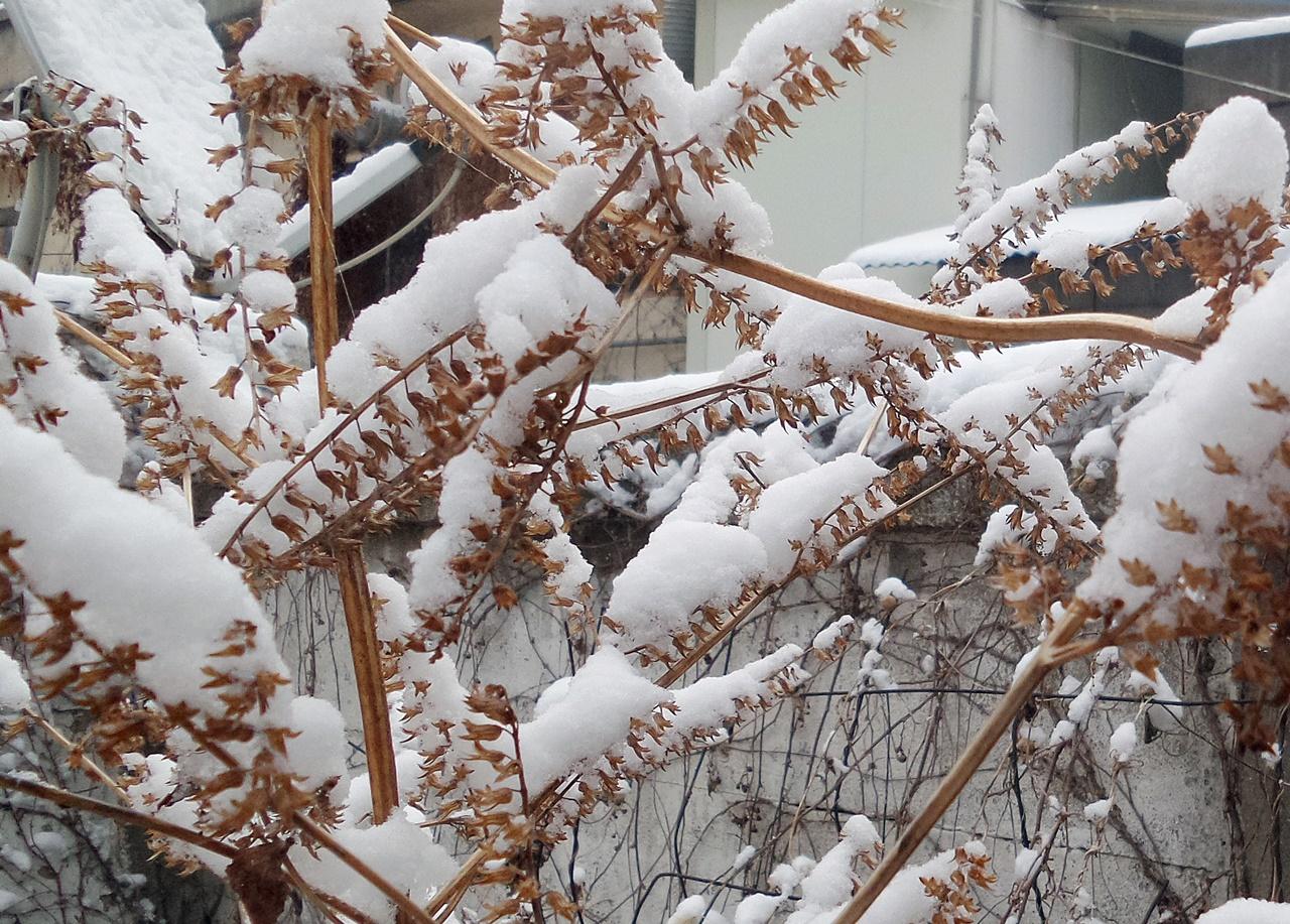 나뭇가지에 내린 눈은 크리스마트 트리를 연상케 한다.