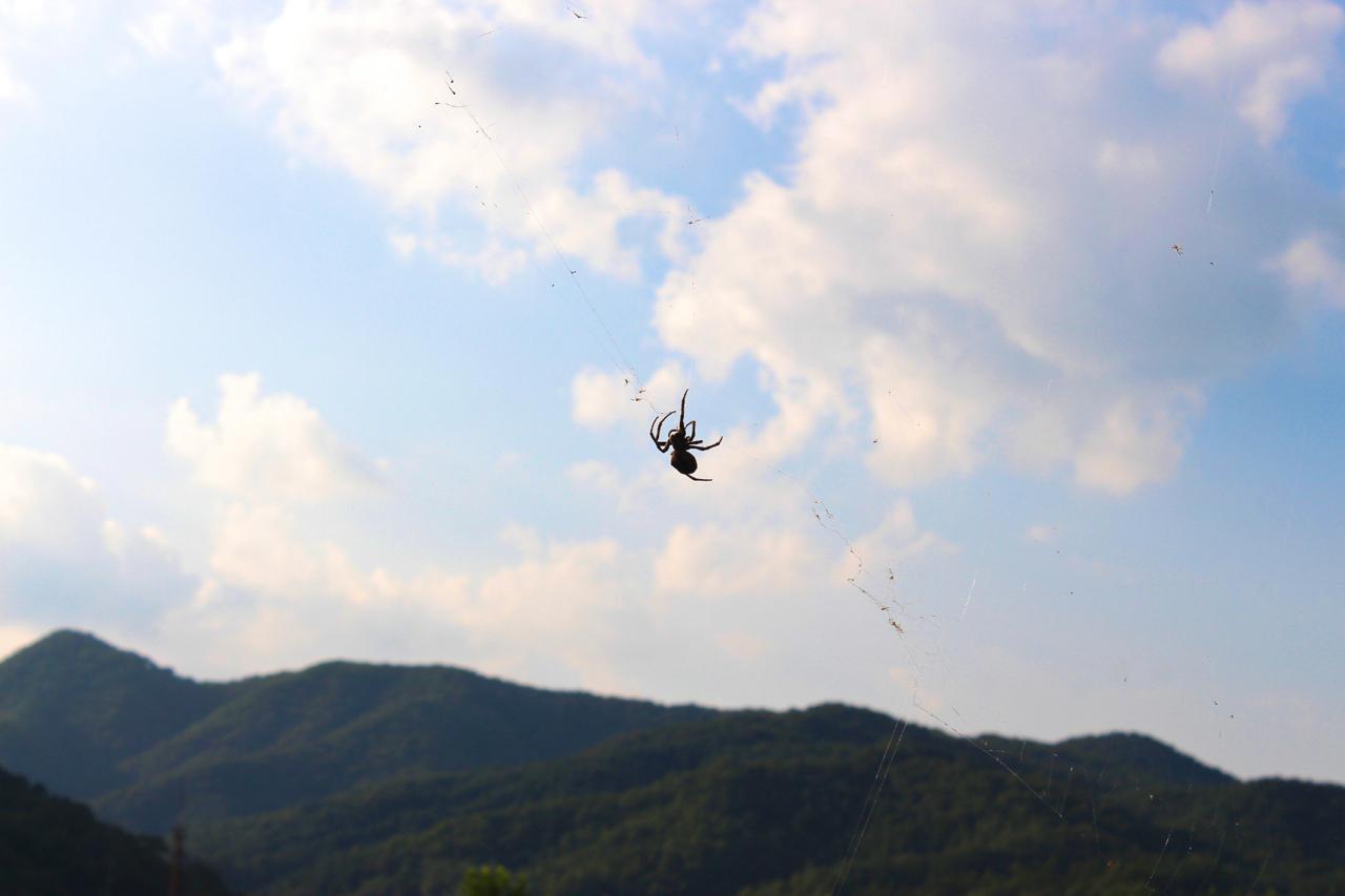 하늘에 걸린 거미