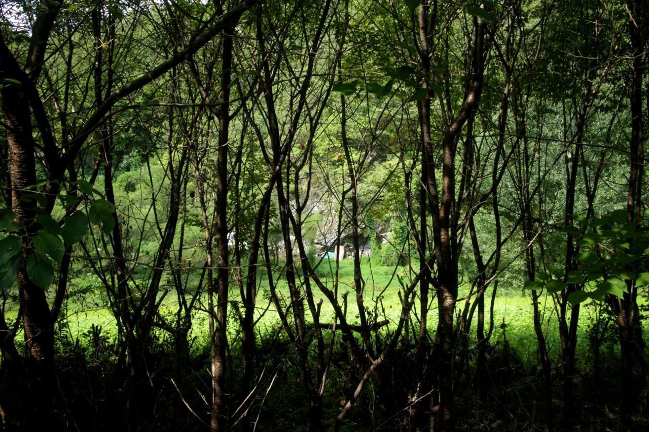 삼포길. 왼쪽으로는 숲이, 오른쪽으로는 내천이 나 있는 걷기 좋은 길이다.