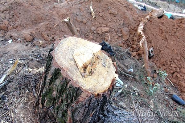 창원시 진해구 자은동 소재 녹지에 '시루봉 등산로 주차장'을 조성하기 위해 소나무 등을 벌목해 놓았다.