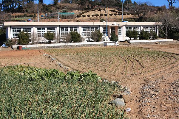 폐교가 된 화태초등학교 여동분교 운동장에는 마늘, 배추, 상추와 봄동이 자라고 있었다