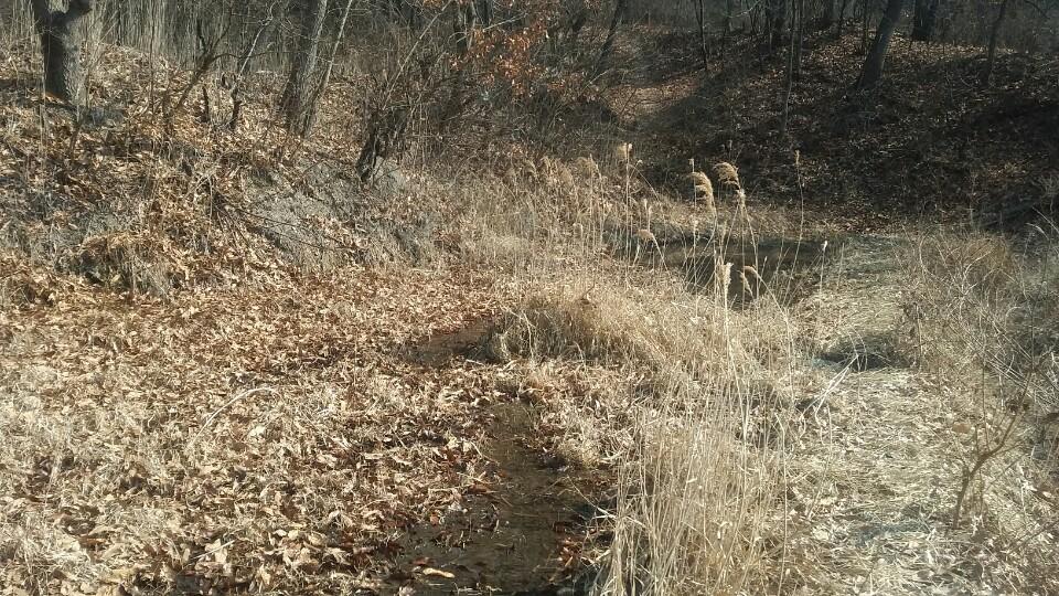 물이 마른 습지 물이 마른 습지에 낙엽이 수북하다.