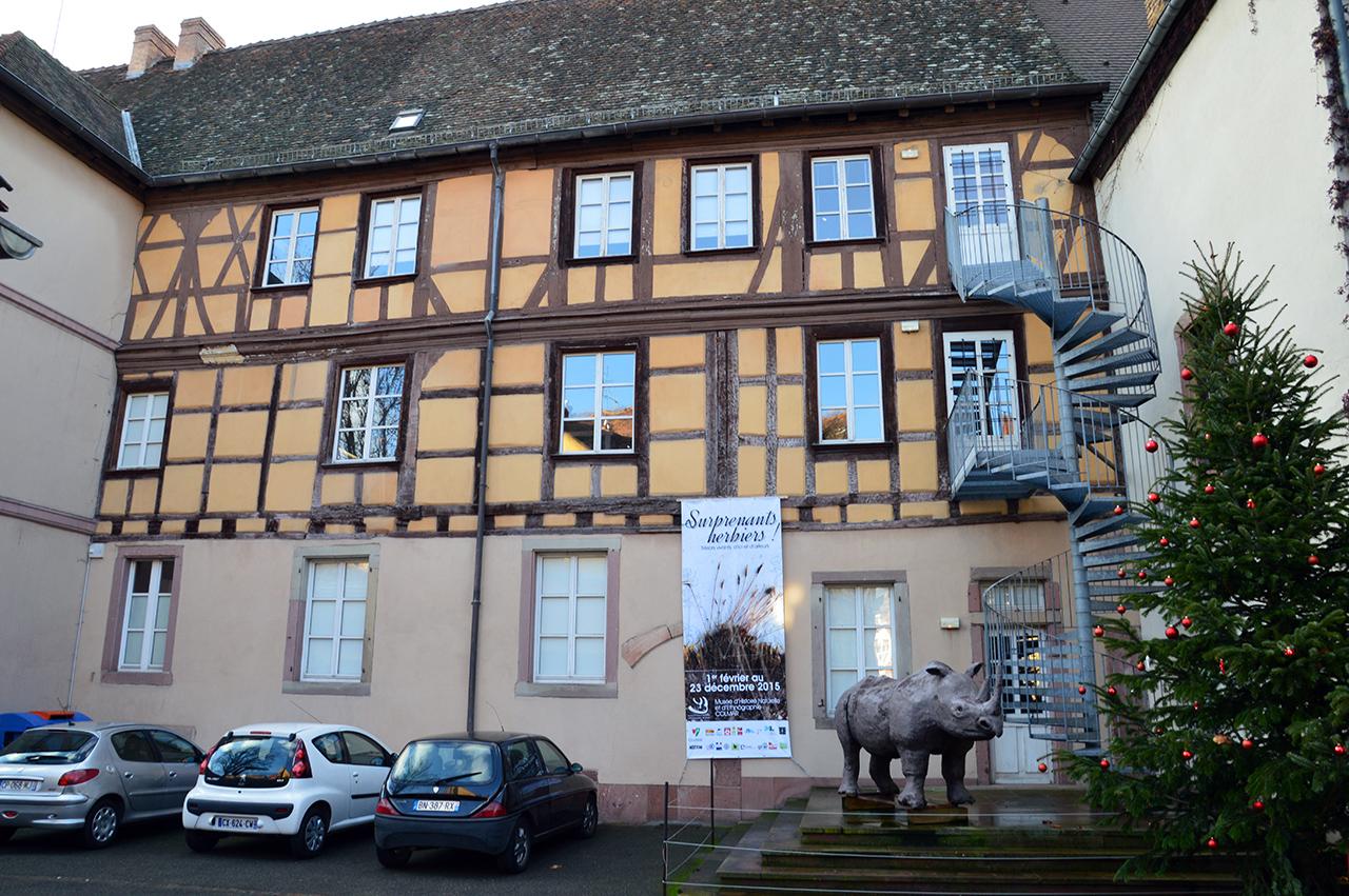 콜마르 자연사박물관. 1859년에 설립된 유서 깊은 박물관으로 다양한 유물을 소장하고 있다.