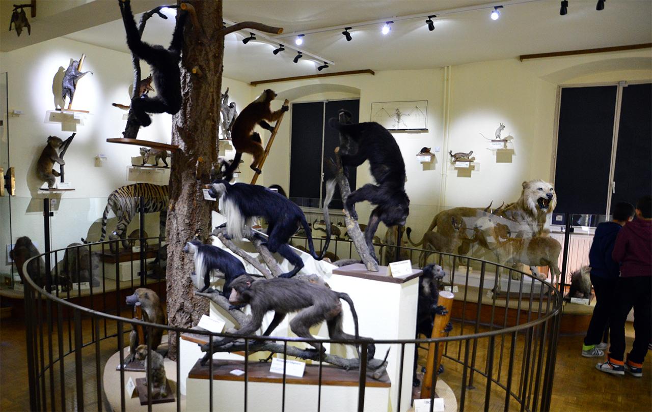 외국 포유동물관. 프랑스의 식민지 국가였던 나라들에서 수집한 동물들이 전시되어 있다.