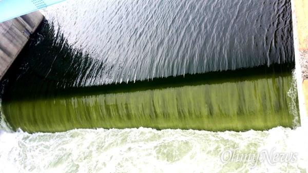 낙동강 창녕함안보에 16일 오후부터 17일 사이 수위를 낮추기 위한 물 방류가 진행되고 있는데, 녹조를 띠고 있다.
