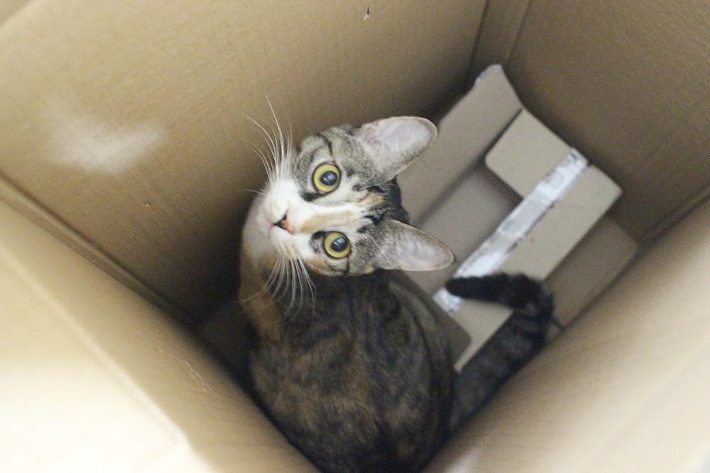 호기심 넘치는 고양이 제이