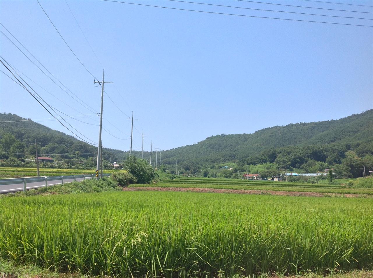 보령시 두룡마을 입구 보령시 웅천읍 두룡마을 입구 전경