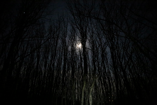 달마산 산행. 나무 사이로 내린 달